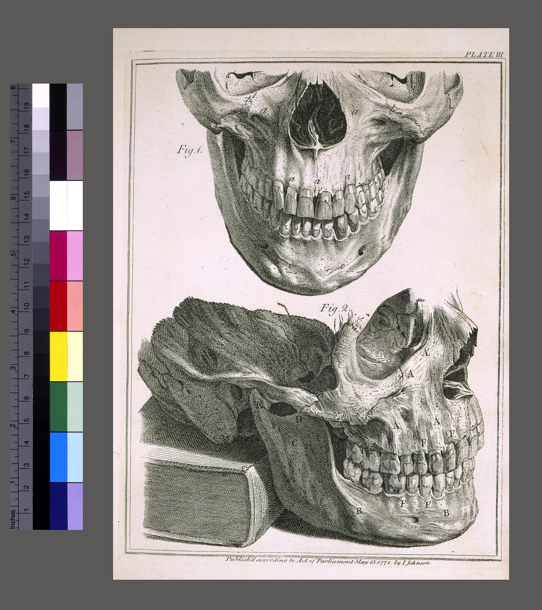 Natural History of the Human Teeth