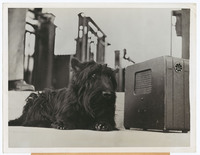 Fala, President Franklin Roosevelt's Dog, Listening to a Radio, photograph and two captions