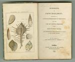 Rudiments of Conchology